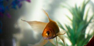 Dlaczego warto wybrać pokrywę z oświetleniem do swojego akwarium